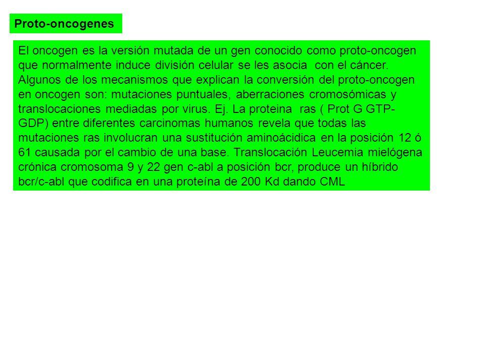 Proto-oncogenes