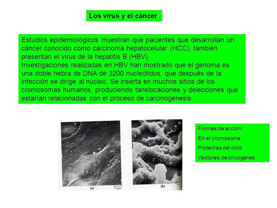 Los virus y el cáncer