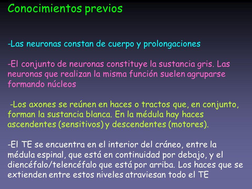 Conocimientos previos -Las neuronas constan de cuerpo y prolongaciones -El conjunto de neuronas constituye la sustancia gris.