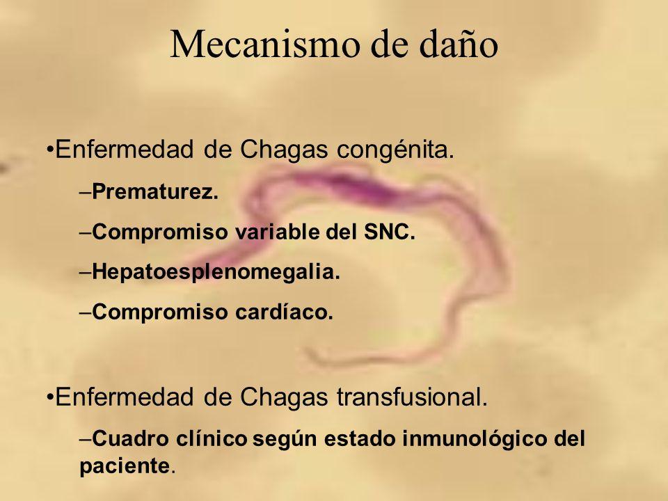 Mecanismo de daño Enfermedad de Chagas congénita.