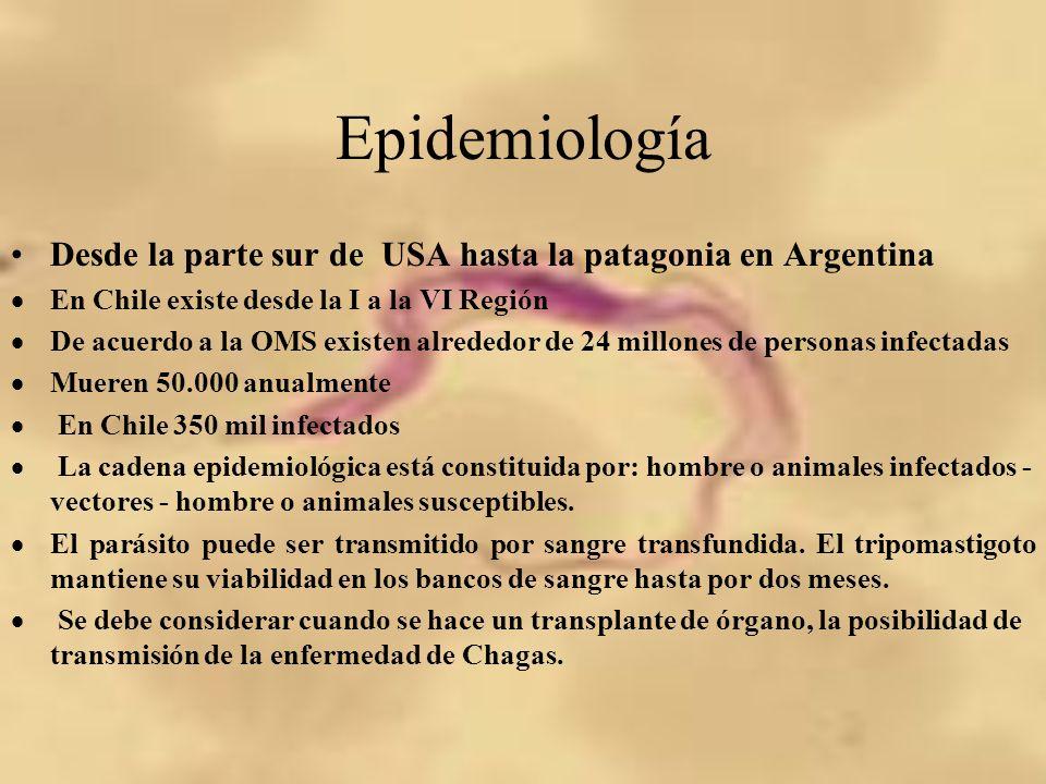 Epidemiología Desde la parte sur de USA hasta la patagonia en Argentina. En Chile existe desde la I a la VI Región.