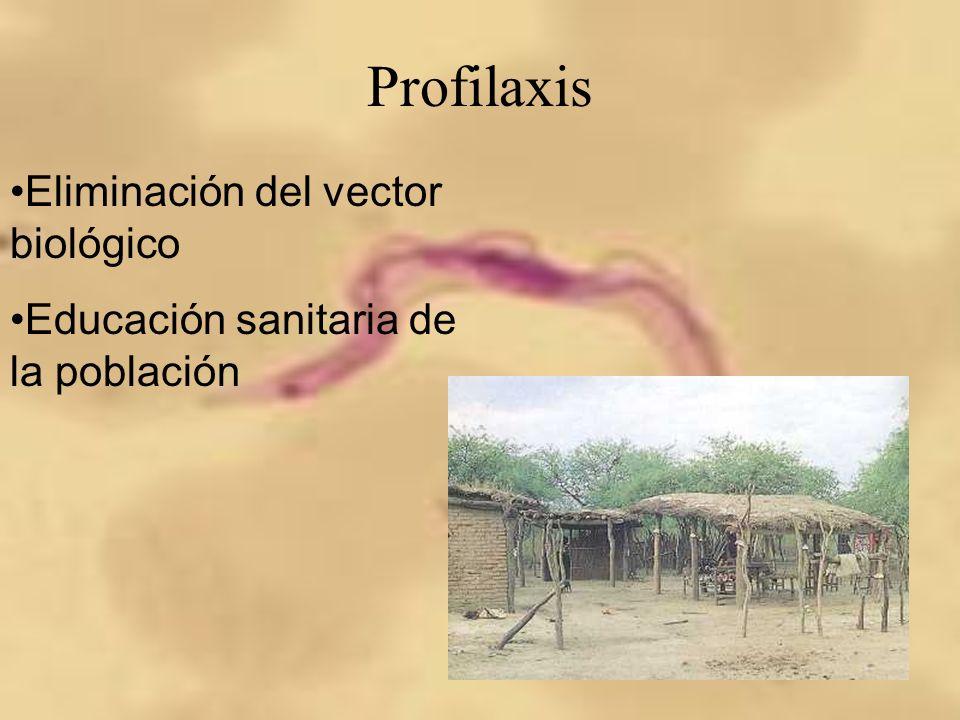Profilaxis Eliminación del vector biológico