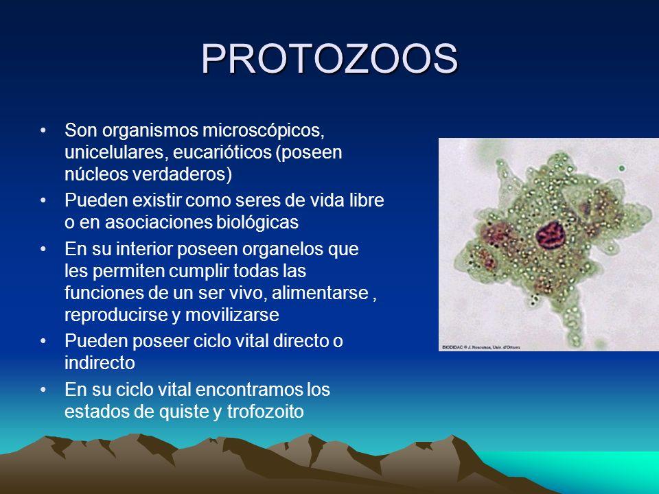 PROTOZOOS Son organismos microscópicos, unicelulares, eucarióticos (poseen núcleos verdaderos)