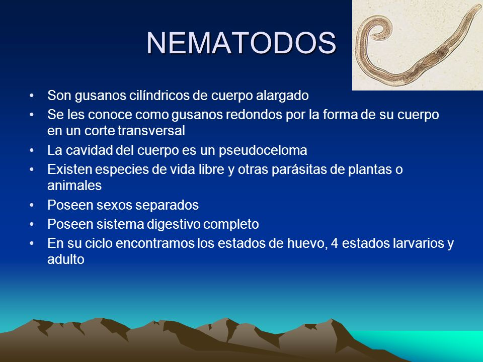 NEMATODOS Son gusanos cilíndricos de cuerpo alargado