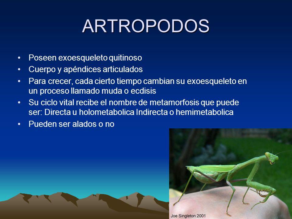 ARTROPODOS Poseen exoesqueleto quitinoso