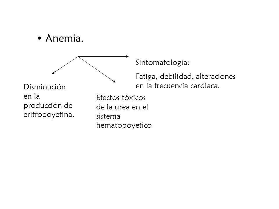 Anemia. Sintomatología: