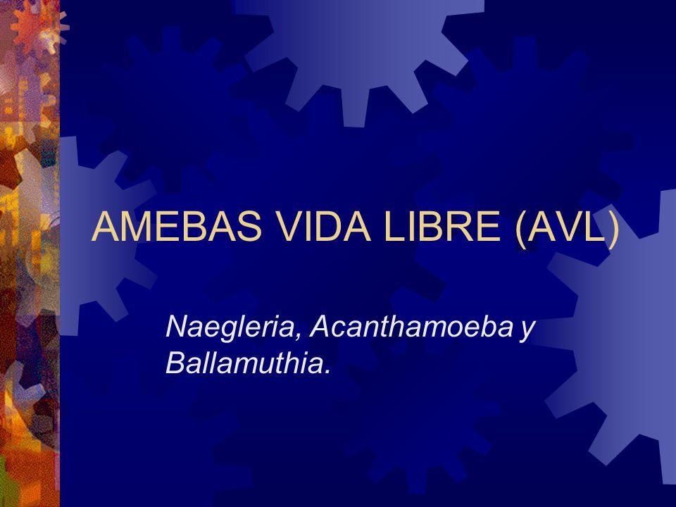 AMEBAS VIDA LIBRE (AVL)