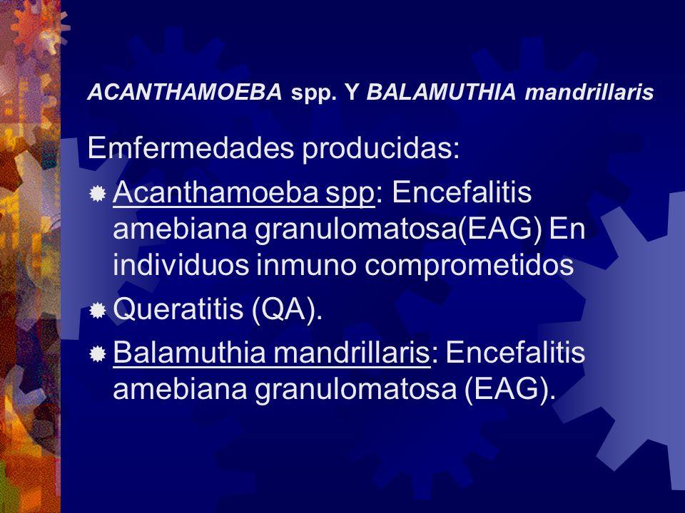 ACANTHAMOEBA spp. Y BALAMUTHIA mandrillaris