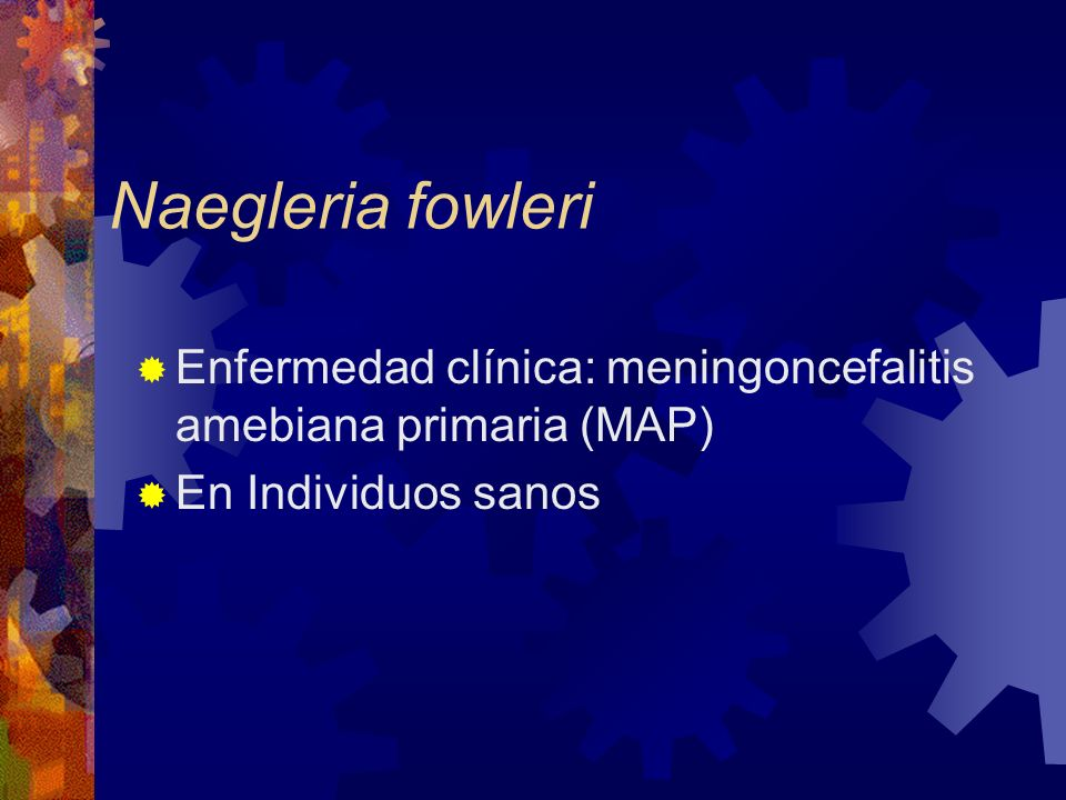 Naegleria fowleri Enfermedad clínica: meningoncefalitis amebiana primaria (MAP) En Individuos sanos
