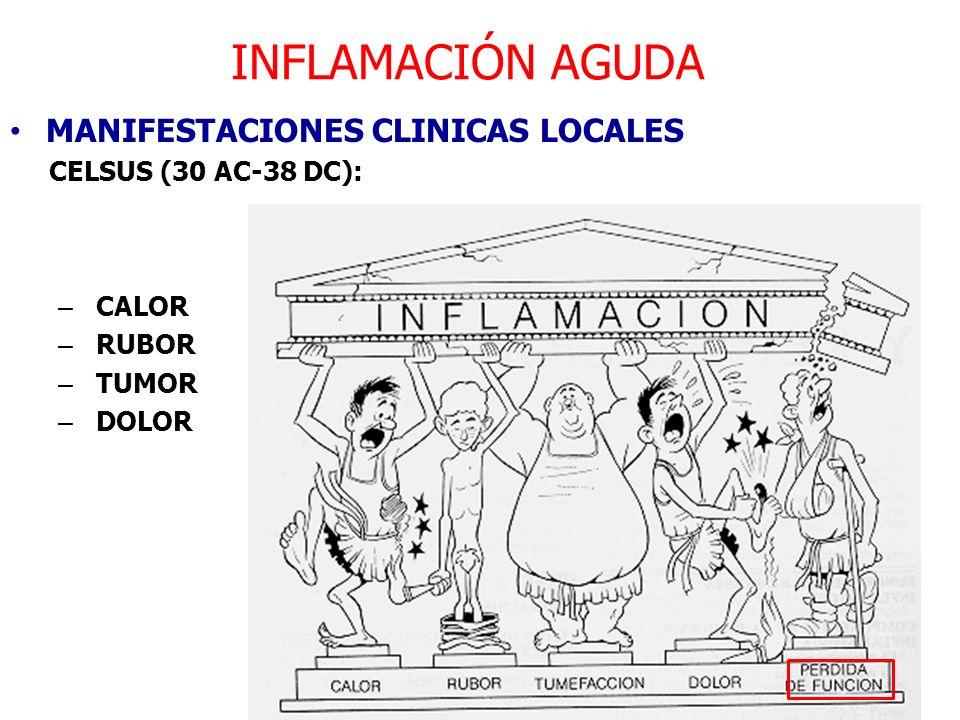 INFLAMACIÓN AGUDA MANIFESTACIONES CLINICAS LOCALES