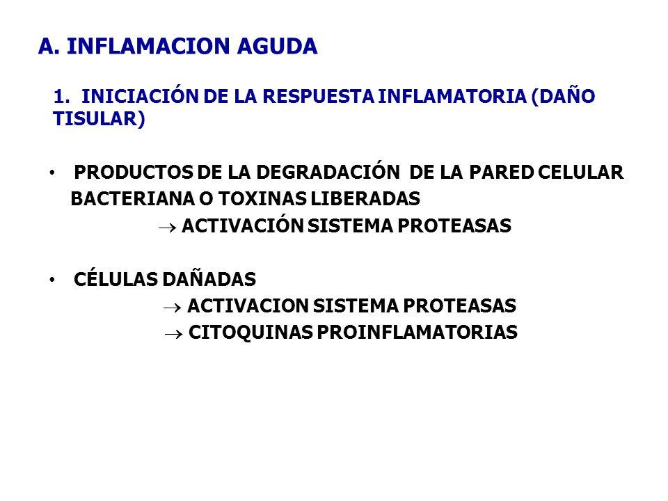 A. INFLAMACION AGUDA 1. INICIACIÓN DE LA RESPUESTA INFLAMATORIA (DAÑO TISULAR)