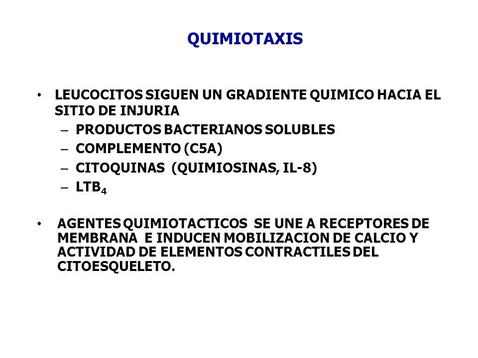 QUIMIOTAXIS LEUCOCITOS SIGUEN UN GRADIENTE QUIMICO HACIA EL SITIO DE INJURIA. PRODUCTOS BACTERIANOS SOLUBLES.