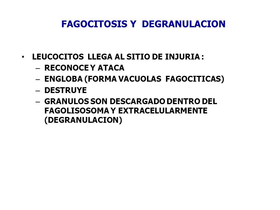FAGOCITOSIS Y DEGRANULACION