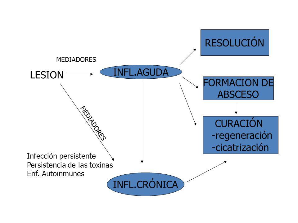 RESOLUCIÓN INFL.AGUDA LESION FORMACION DE ABSCESO CURACIÓN