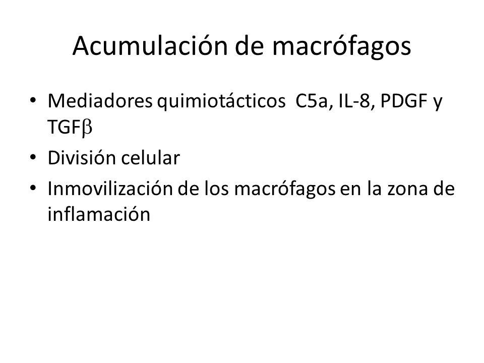 Acumulación de macrófagos