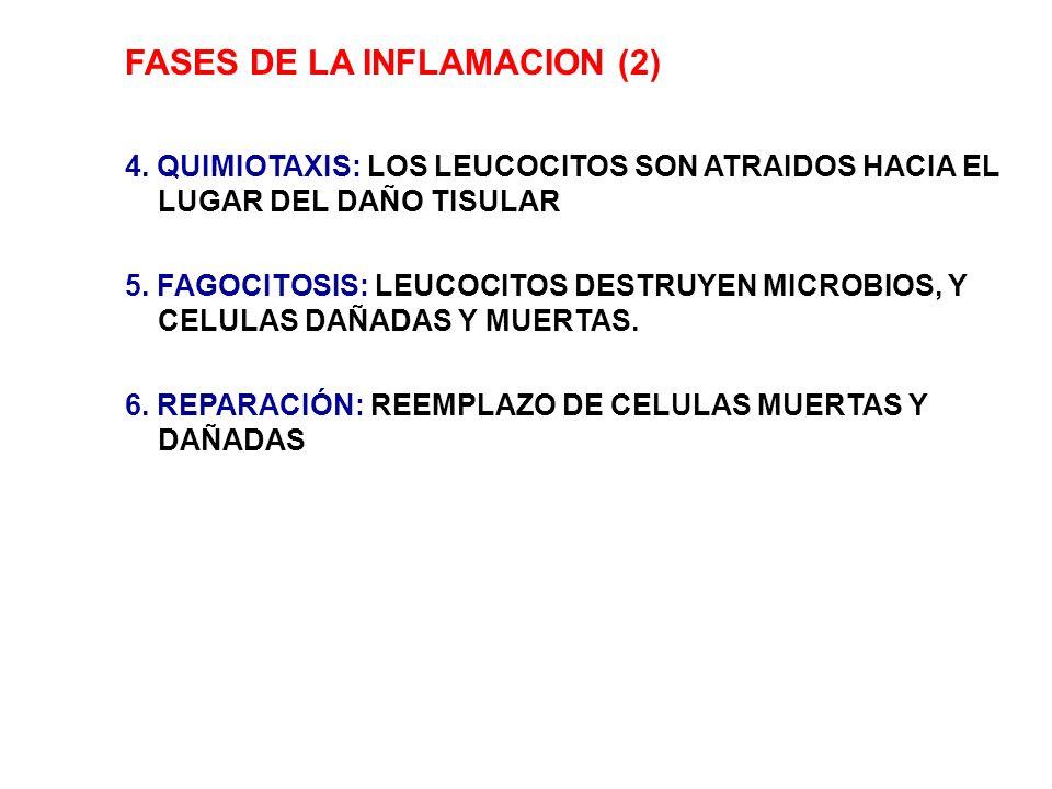 FASES DE LA INFLAMACION (2)