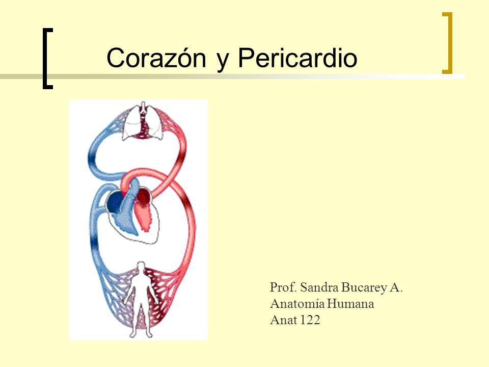 Corazón y Pericardio Prof. Sandra Bucarey A. Anatomía Humana Anat 122