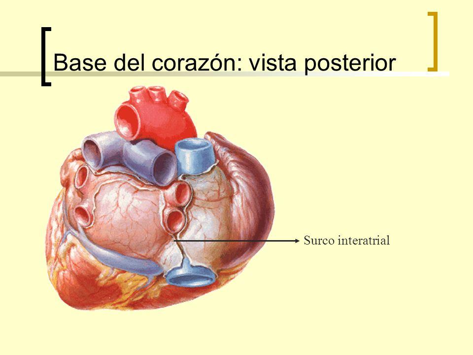Base del corazón: vista posterior