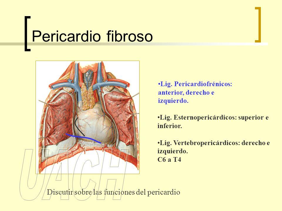 Pericardio fibroso UACH Discutir sobre las funciones del pericardio