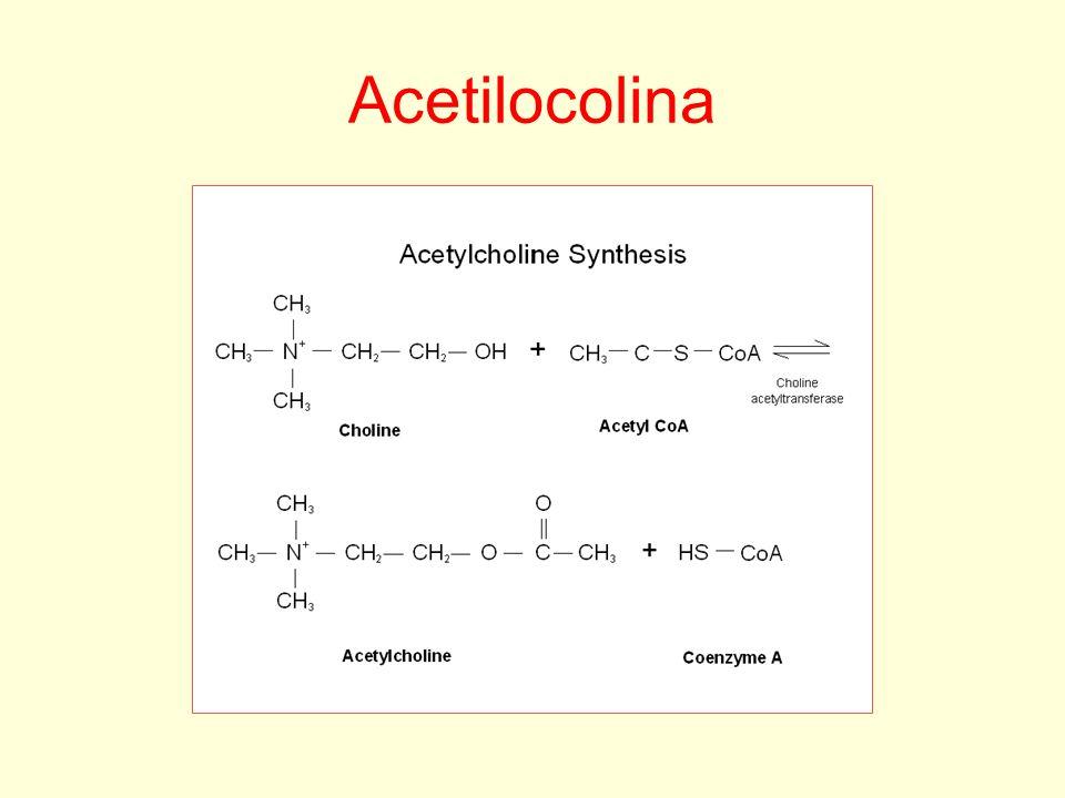 Acetilocolina