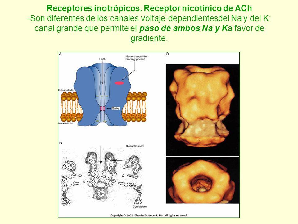 Receptores inotrópicos