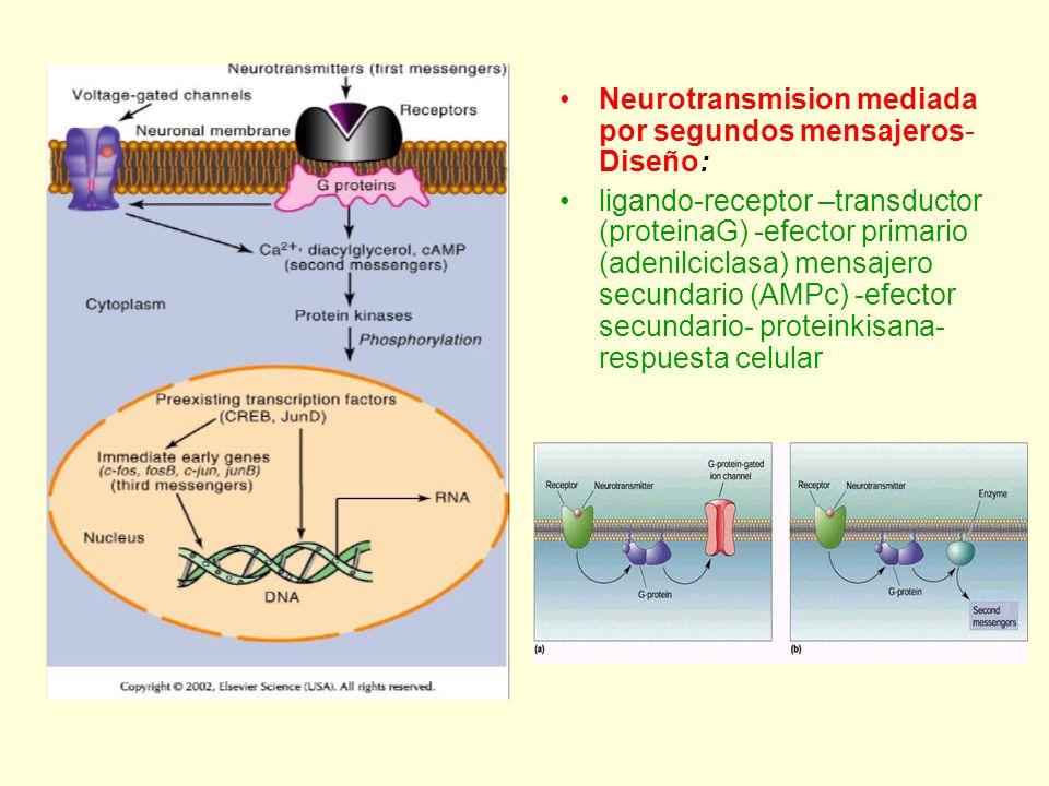 Neurotransmision mediada por segundos mensajeros-Diseño: