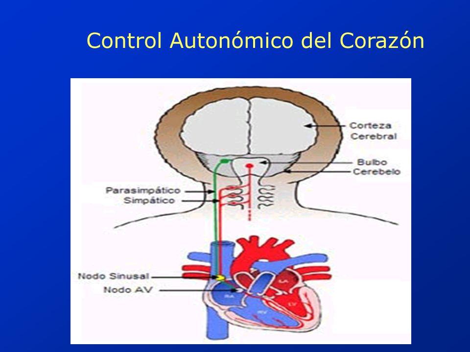 Control Autonómico del Corazón