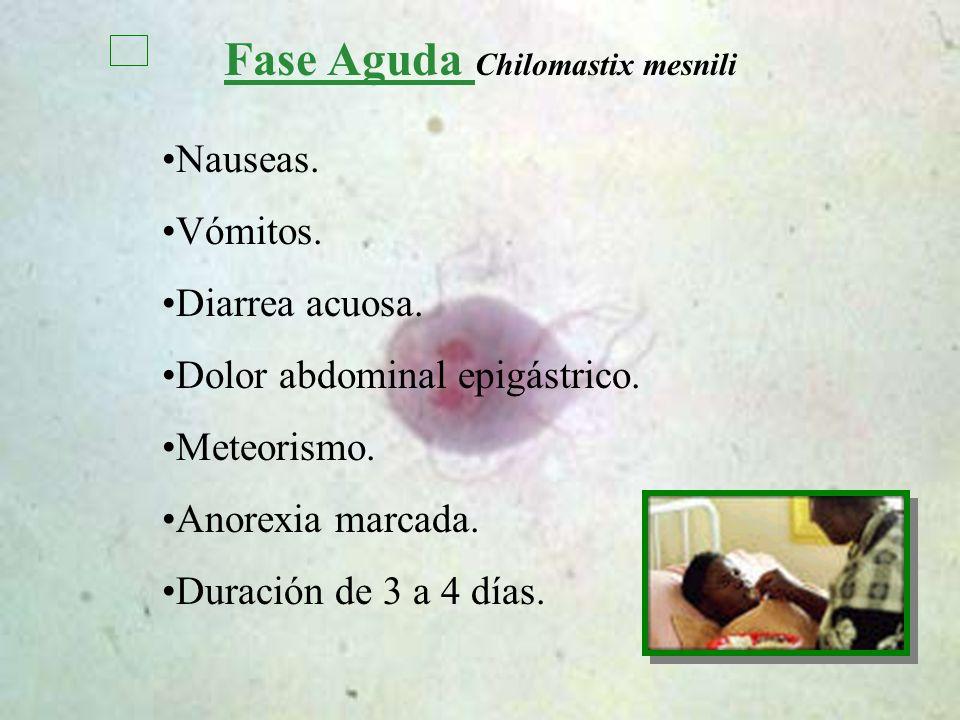 Fase Aguda Chilomastix mesnili