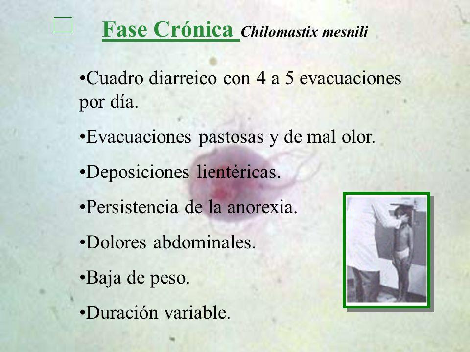 Fase Crónica Chilomastix mesnili