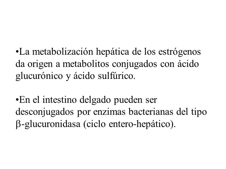 La metabolización hepática de los estrógenos da origen a metabolitos conjugados con ácido glucurónico y ácido sulfúrico.
