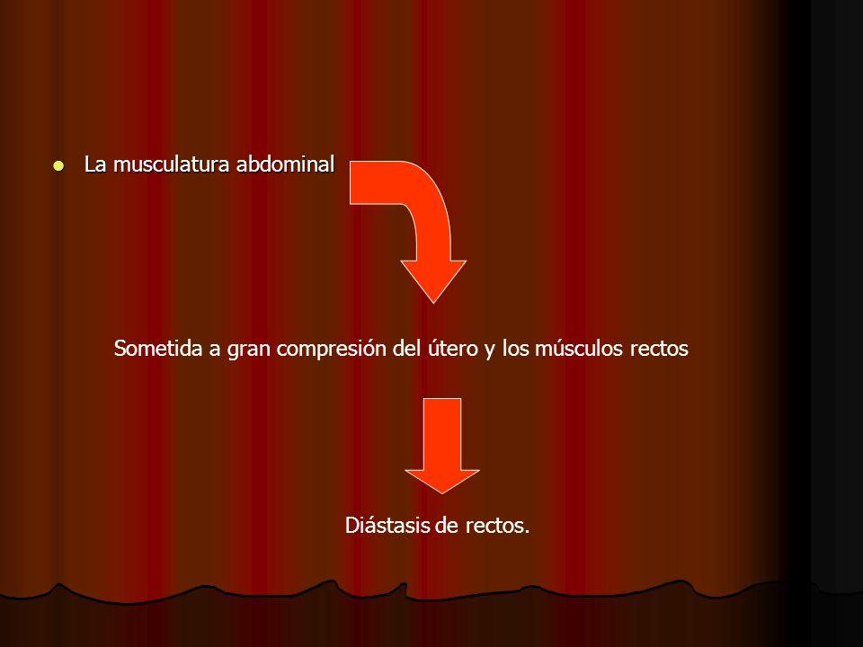La musculatura abdominal