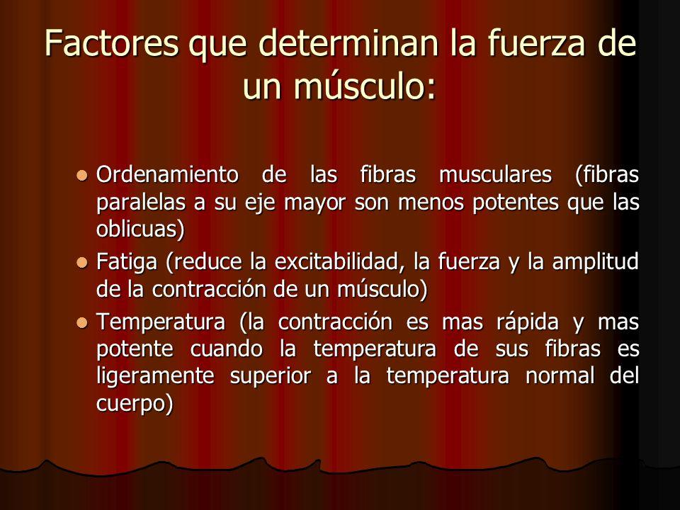Factores que determinan la fuerza de un músculo: