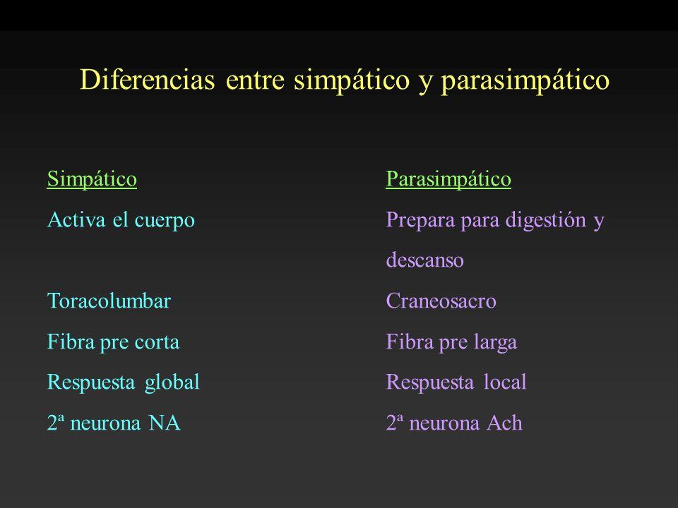 Diferencias entre simpático y parasimpático