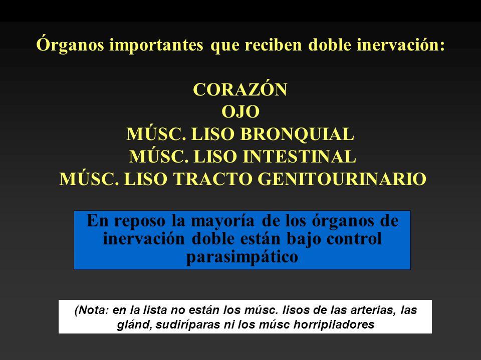 Órganos importantes que reciben doble inervación: CORAZÓN OJO MÚSC