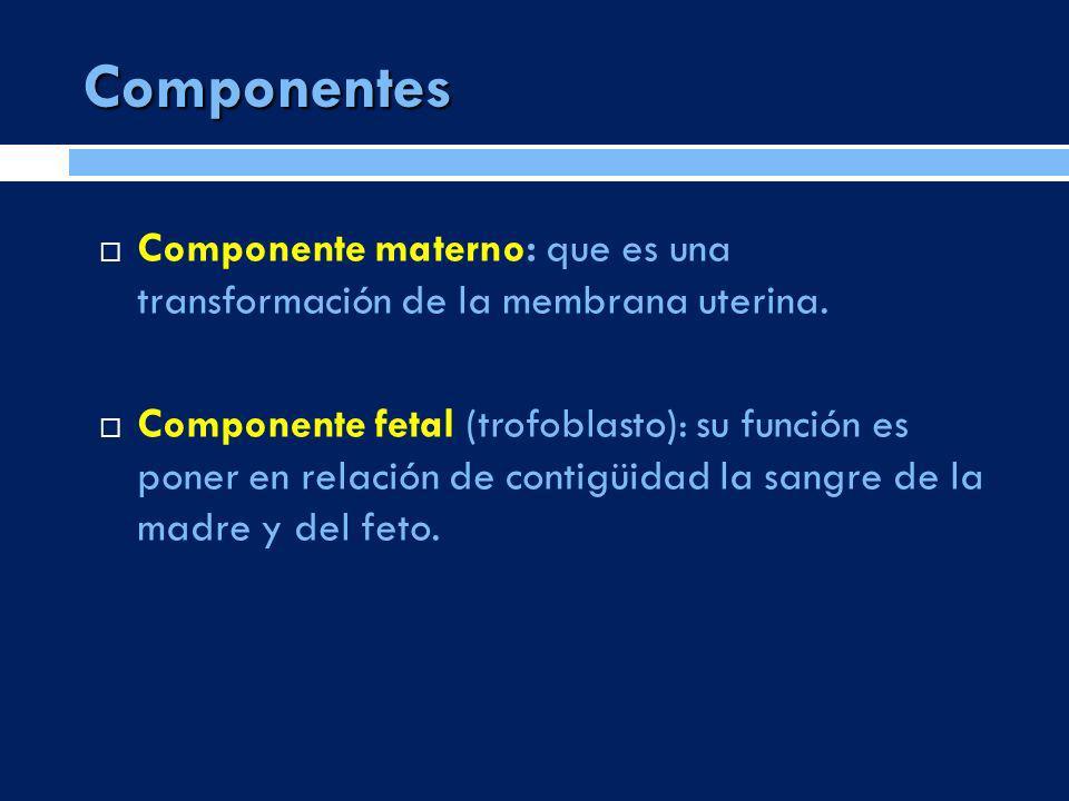 Componentes Componente materno: que es una transformación de la membrana uterina.