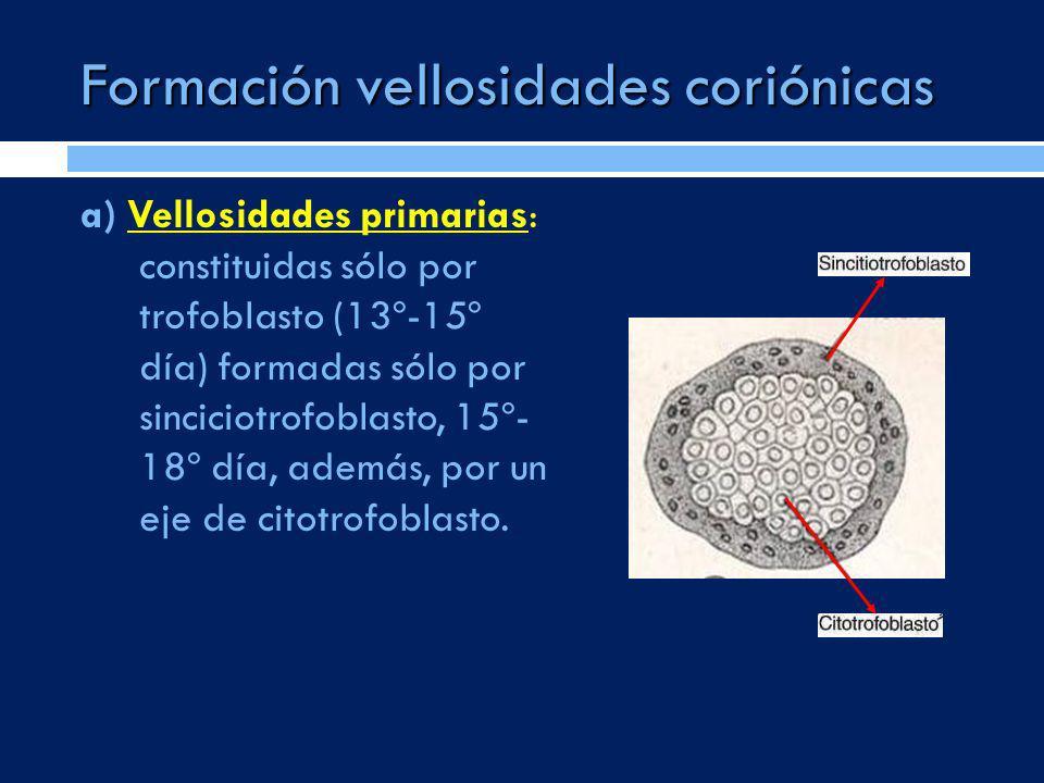 Formación vellosidades coriónicas