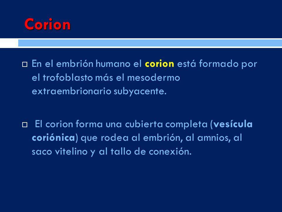 Corion En el embrión humano el corion está formado por el trofoblasto más el mesodermo extraembrionario subyacente.