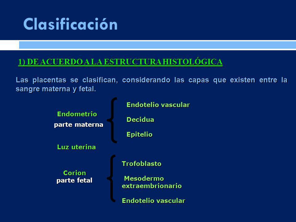 Clasificación 1) DE ACUERDO A LA ESTRUCTURA HISTOLÓGICA