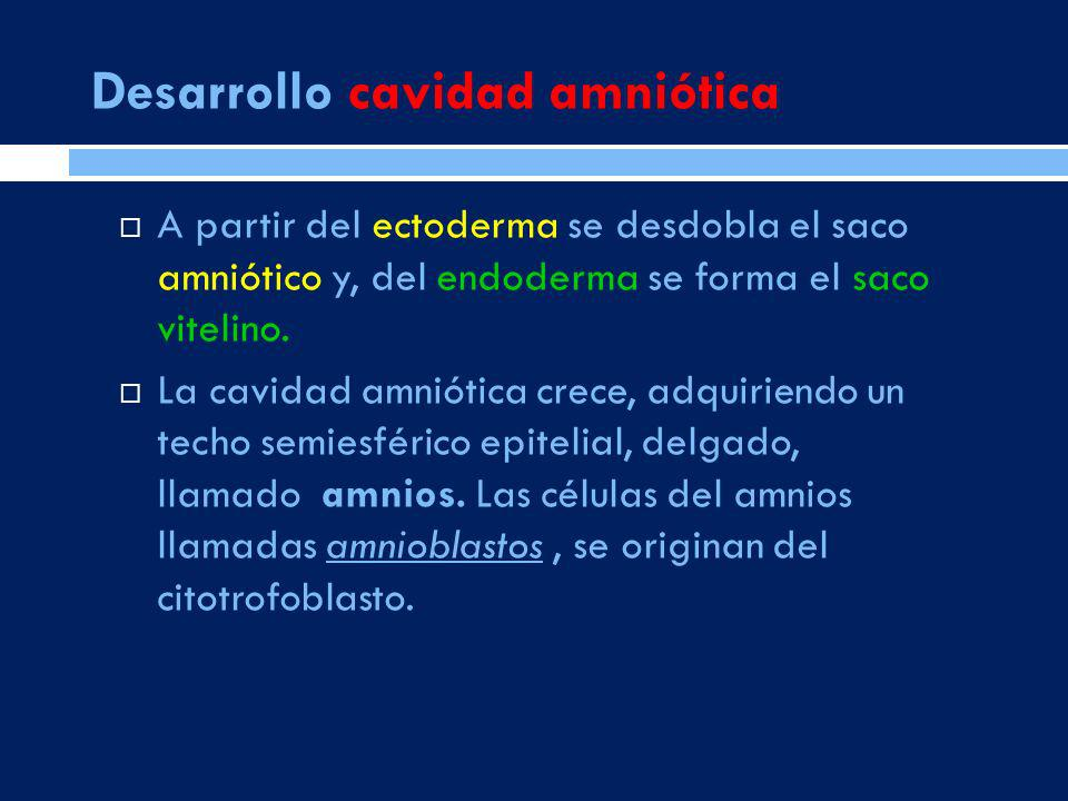 Desarrollo cavidad amniótica
