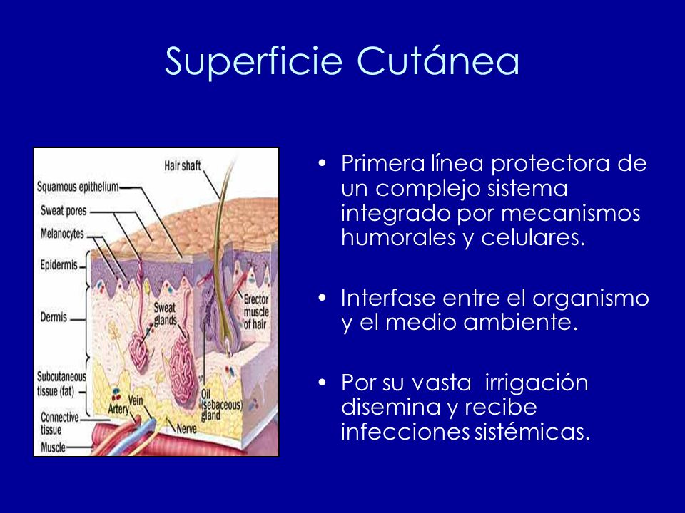 Superficie Cutánea Primera línea protectora de un complejo sistema integrado por mecanismos humorales y celulares.
