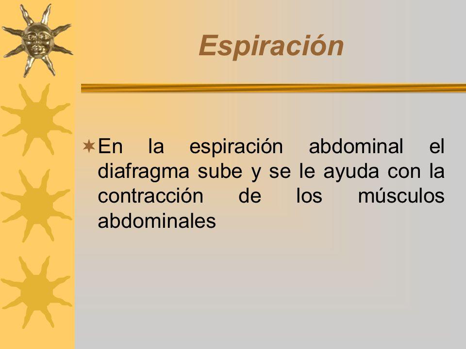 Espiración En la espiración abdominal el diafragma sube y se le ayuda con la contracción de los músculos abdominales.