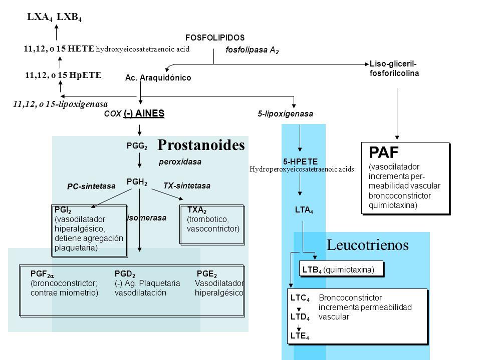 Prostanoides PAF Leucotrienos LXA4 LXB4