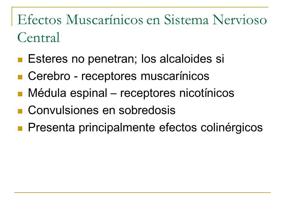 Efectos Muscarínicos en Sistema Nervioso Central