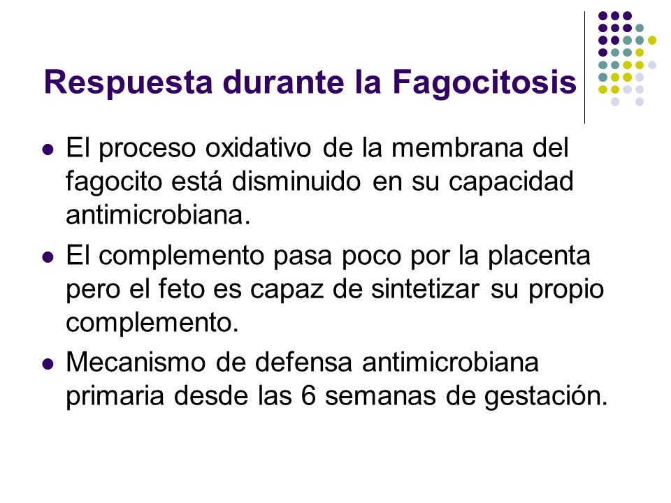 Respuesta durante la Fagocitosis