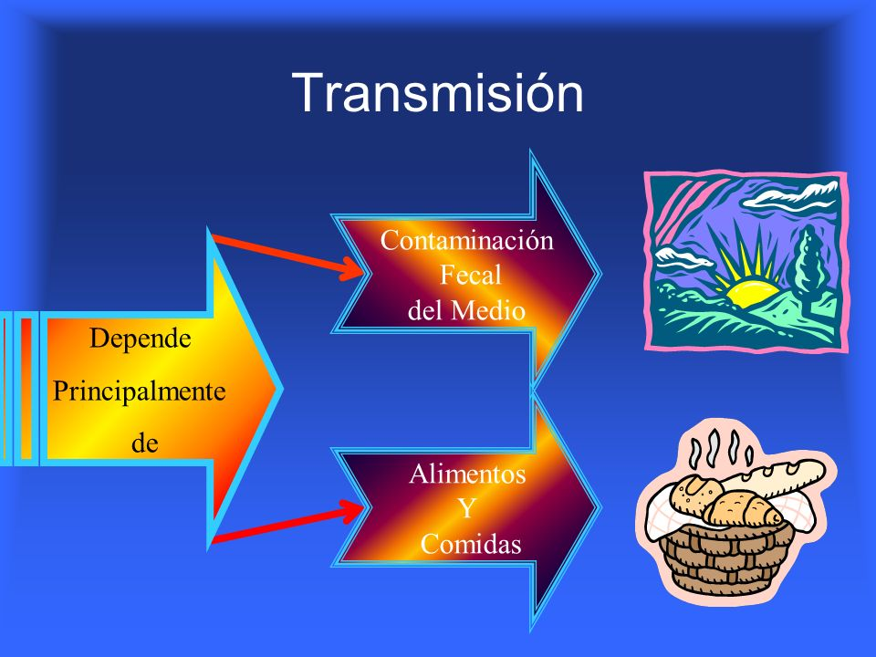 Transmisión Contaminación Fecal del Medio Depende Principalmente de