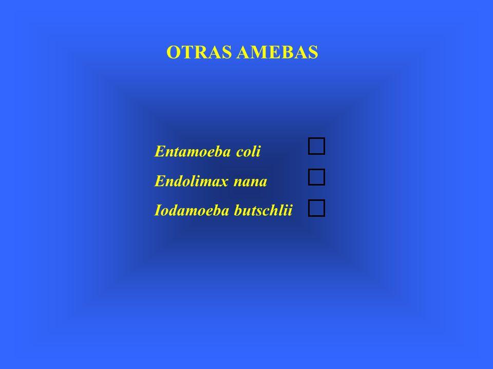 OTRAS AMEBAS Entamoeba coli Endolimax nana Iodamoeba butschlii