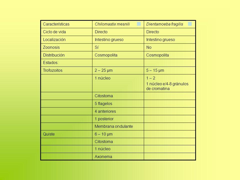 Características Chilomastix mesnili. Dientamoeba fragilis. Ciclo de vida. Directo. Localización.