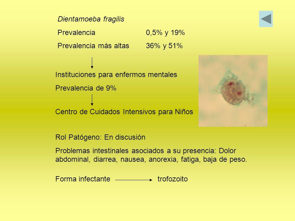 Dientamoeba fragilis Prevalencia 0,5% y 19% Prevalencia más altas 36% y 51% Instituciones para enfermos mentales.