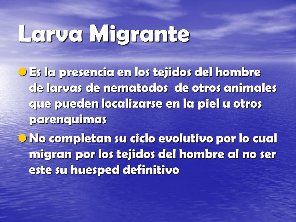 Larva Migrante