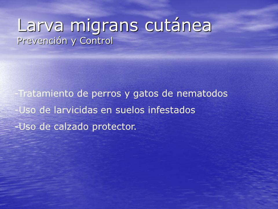 Larva migrans cutánea Prevención y Control